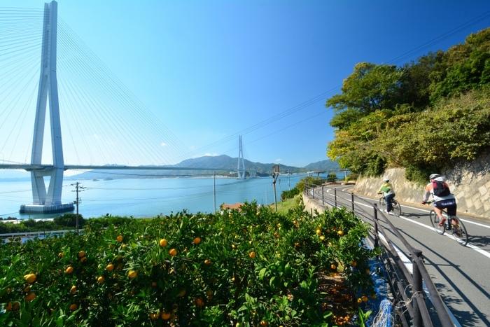 """【画像は""""しまなみ海道""""のサイクリングコースと多々羅大橋。】"""