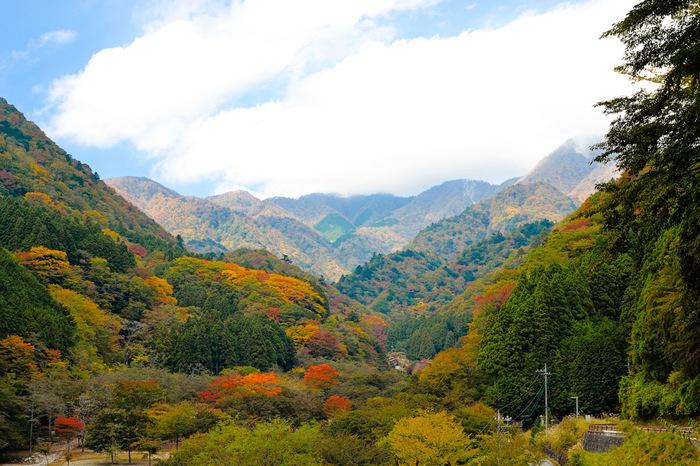 標高400メートルから1200メートルに位置する西丹沢県民の森の面積は、162.4ヘクタールにも及びます。四季折々で美しい姿を見せてくれる森は、晩秋になると、山全体が錦を纏ったかのような美しい姿へと変貌します。