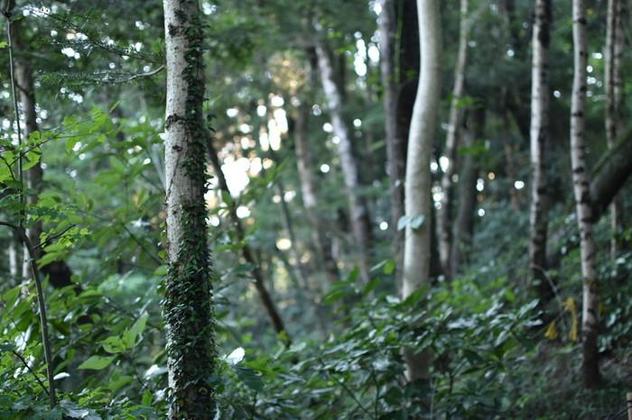 東京都八王子市にある高尾山は、秩父山地の一つで、標高599メートルの山です。東京都心近くにありながらも、豊かな自然が広がっており、ブナ、ナラ、ホオノキをはじめとする落葉樹やモミ、ツガなどの針葉樹が豊かに生い茂っています。