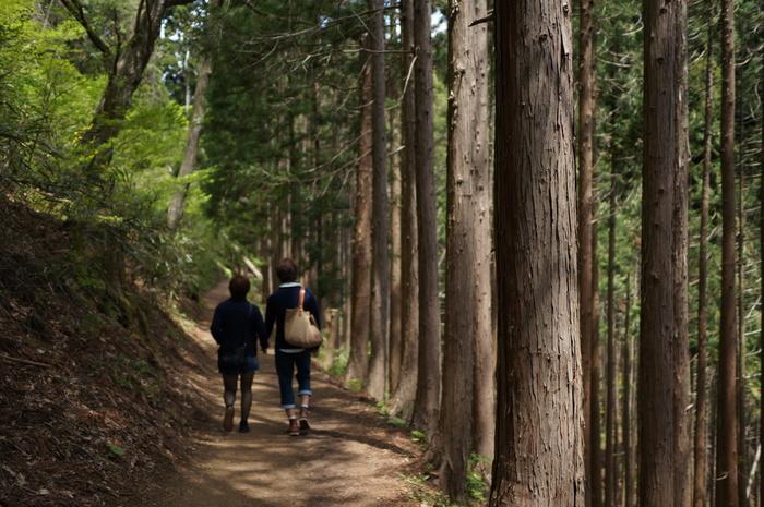 東京都青梅市にそびえる御岳山は、標高929メートルの山です。豊かな森が広がる御岳山は、都心からのアクセスもよいことから日帰りハイキングスポットとして人気があります。