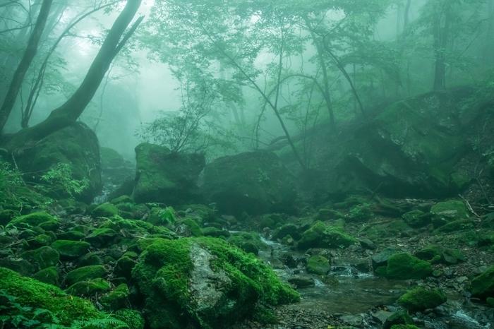 背の高い樹々が鬱蒼と生い茂る森の中は日中でも薄暗く、立ち込める霧と苔むした樹々が織りなし、幽玄とした雰囲気が漂っています。