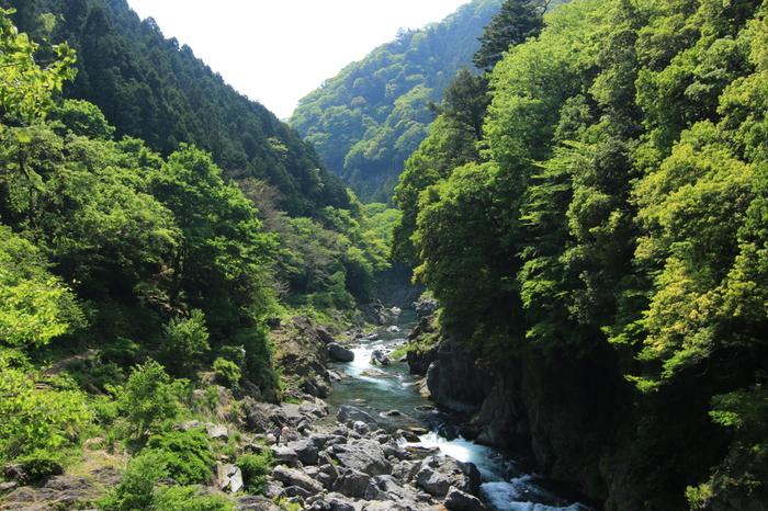 豊かに生い茂る深い森、約40メートルの断崖、崖下に点在する無数の奇岩・巨岩が存在感を放つ独特の景観美が広がる鳩ノ巣渓谷は、多摩川上流に広がる渓谷です。