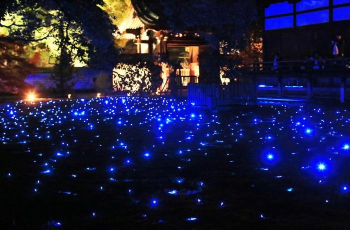 苔庭には蒼く輝く星が無数に散りばめられます。苔庭の海に浮かぶ光の星は、夜空を乱舞するホタルのようです。