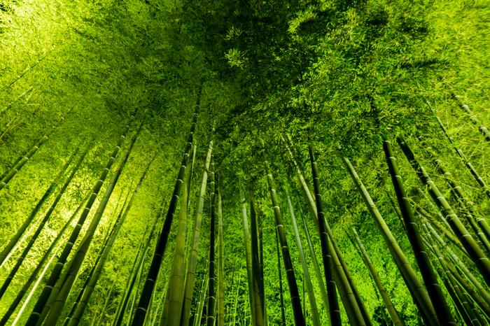 高台寺境内にある竹林のライトアップも必見です。夜空を覆う青竹はライトを浴びて輝き、まるで緑色に輝くトンネルの中に迷い込んだ気分を覚えます。
