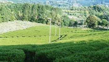 日本茶は育てる土地、品種、製造焙煎でまったく違った味を作り出してくれるものです。茶葉の個性を育てる生産人や茶葉の個性を見極める鑑定人、そして焙煎人。さまざまな人の出会いによって、最高の日本茶が出来上がります。