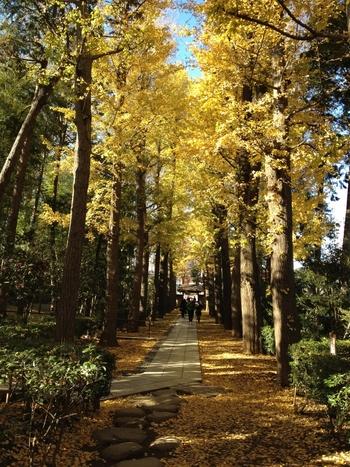 文化人も愛した街「荻窪・西荻窪」。ゆったり時間が流れる素敵なカフェ&喫茶店【5選】