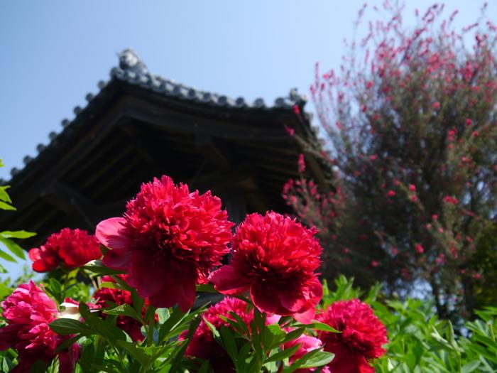 関西花の寺二十五霊場20番に指定されている石光寺は、花の寺としても知られており、境内では四季折々で美しい花を観賞することができます。