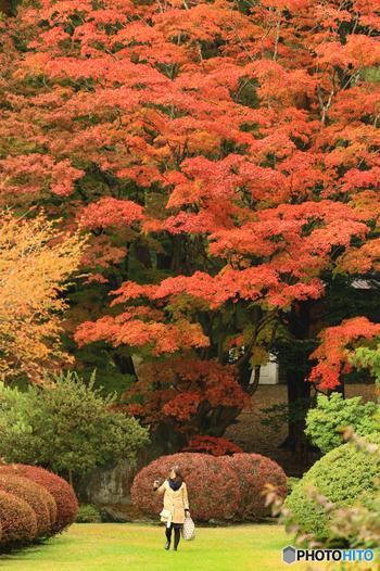 湯の川地区の高台に位置する「見晴公園」内にある「香雪園(こうせつえん)」。市内有数の豪商であった岩船家が、1890年代に別荘として造成した風景式庭園です。レンガ造りの温室や渓流、茶室様式を取り入れた書院造りの園亭など、変化に富んだ日本庭園を見ることができます。