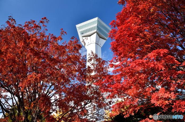 春は桜の名所として有名な五稜郭ですが、秋には紅葉も楽しめます。紅葉やイチョウのほか、エゾヤマザクラやソメイヨシノも紅葉。10月末までは貸しボートでお堀を巡ることもできるので、ひと味ちがう景観を楽しむこともできそうです。