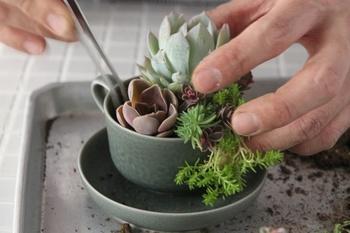 ④メインの大き目の植物とサブメインの植物を植え、その隙間を小さい植物で埋めていくイメージです。細かな植物は数種類をブーケにして入れ込み、土を足していきます。