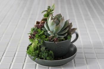 ⑤土を奥までマドラーで押し込み、倒れそうな植物はUピンで固定するか他の植物を埋め込み支えたら完成です。いかがでしょうか。自分でもつくれそうな気になってきましたか・・?