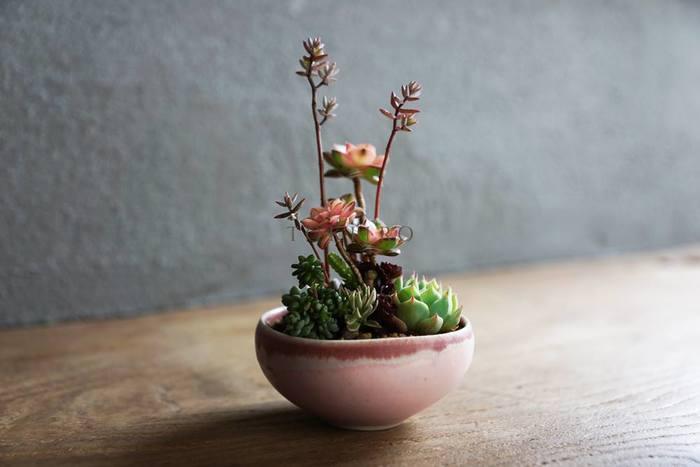 花が咲いたり紅葉する多肉植物の四季の色を楽しむようにと、時間が経過した時のことも考えられたアレンジが特徴的です。