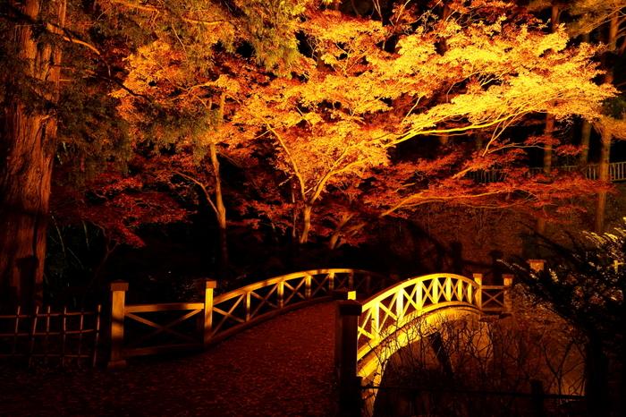 紅葉シーズンの庭園をライトアップするイベント「はこだてMOMI-Gフェスタ」は、2016年10月22日(土)~11月13日(日)。昼間とはまた違う、神秘的な庭園の姿を楽しむことができます。ライトアップは16:00〜21:00,夜間は冷え込みますので、暖かい服装でお出かけくださいね。