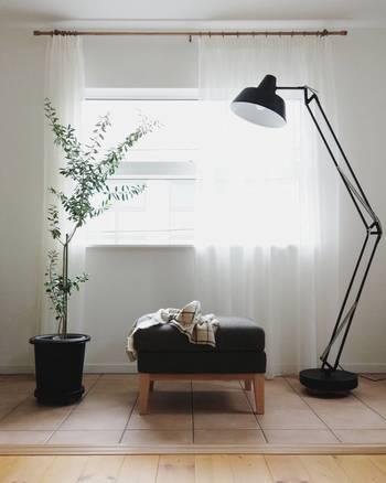 シンプルなお部屋のフォーカルポイントになる大物グリーン。ナチュラル・シンプルなインテリアに合うのは枝が細く、葉がモリモリしすぎていないタイプ。さりげなく空間に馴染むのが圧迫感もなくおすすめ◎こちらはオリーブです。