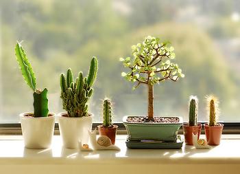 気軽に集めやすい小さいサイズの植物。数が集まってきたら、何個かまとめて植物コーナーを作ってみるのも素敵。