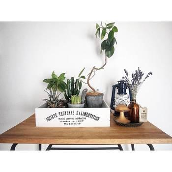 小さめのグリーンを木箱に集めたアイディア。サボテンやランタンがどことなく、アウトドアリビングな雰囲気に。