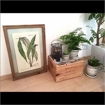 ボタニカルフレームの横にワイン箱を台にした植物コーナー。英字新聞や流木がさりげなく添えてあり、異国情緒溢れるコーナーに仕上がっています。