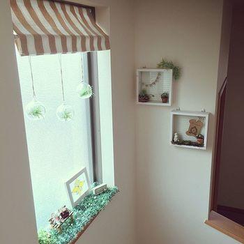 窓辺に吊るしたテラリウム。紐の長さを変えて動きをつけて。種類違いのグリーンが欲しくなりがちですが、同じ種類だとより統一感が出ます。