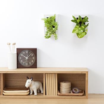 壁からグリーンが生えているような斬新なフレームタイプ。こんなユニークな飾り方も取り入れていきたいですね。