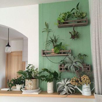 調味料ラックを壁に取り付けて、グリーン専用の壁に。観葉植物とエアプランツ、ドライフラワーとが見事に共存した一体感のあるコーナーに仕上がっています。