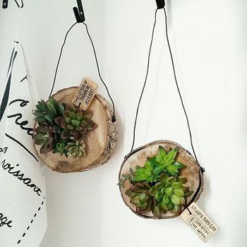 土が苦手な方には、多肉植物やエアプランツを壁掛けするアイディアもおすすめです。こちらの土台はカブトムシのゼリーを入れる丸太だそうです!