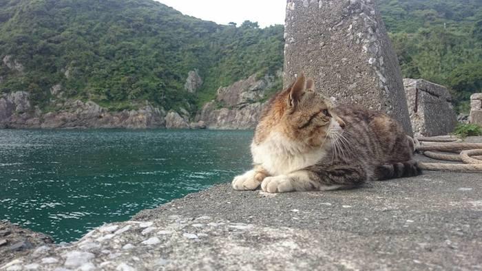 のんびりと堤防に佇むネコ・・・地域のネコたちが幸せそうに暮らすことができる場所は、まるでそこに暮らす人々のこころのあたたかさを物語っている様です。