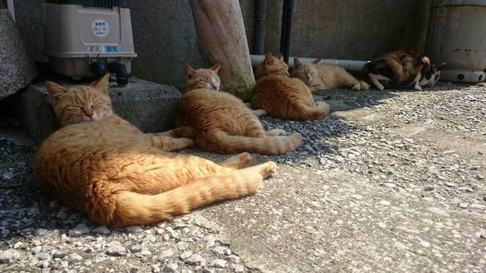 穏やかに目を閉じ、ゆらゆらしっぽを揺らしながらまどろむネコたちを見ていると、ついこちらまでウトウトとしてしまいそう。