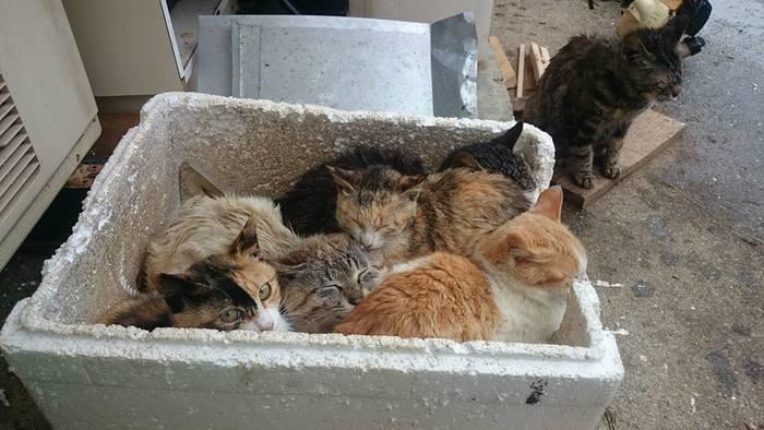 にゃんこ専用?発砲スチロールの箱のなかで暖をとる島ネコたち。基本は地域ネコだそうですが、実は島の人が自分の家の周辺をテリトリーにしている子をそれぞれかわいがっていたりするのだそうです。