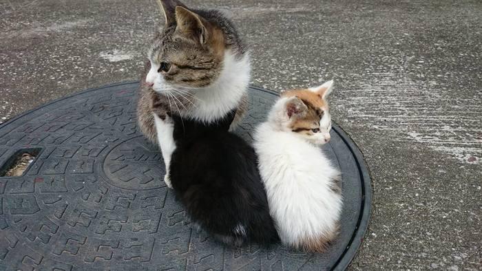 子猫はちっちゃくてかわいいけど、それだけに人間に慣れてない子もたくさんいるからそっとやさしく見守ってくれるとうれしいな・・・