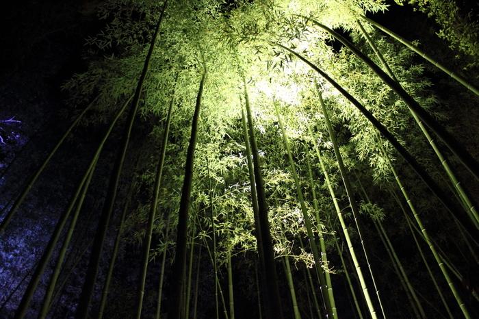 目線を上に向けると、天を仰ぐほどまっすぐに伸びた青竹の葉が視界に飛び込んできます。竹林の小径を歩いていると、まるで緑のトンネルに迷い込んだような錯覚を感じます。漆黒の闇に、光を浴びた輝く青竹がくっきりと浮かびあがる様子は、京友禅の染め柄のようです。