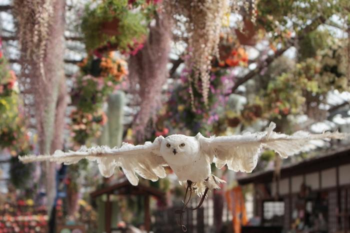 富士花鳥園では、世界中から集められた約30種類、100羽ものフクロウたちが訪れる人々を待っています。