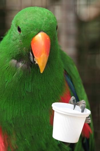 ロリキートランディングでは、色とりどりのインコたちが待っています。インコの餌やりはとっても楽しいですよ。