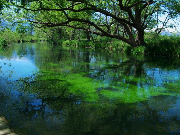 わさび田に注がれる湧水は、大王わさび農園で豊かで穏やかな流れを作っています。清らかな水の流れはまるで絵画のよう。せせらぎの音に耳が癒されます。
