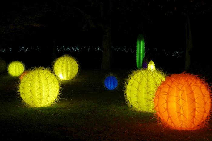 色とりどりのあかりで演出された、光るサボテンたち。植物園らしい雰囲気で、訪れる人々をほっこりとさせてくれます。