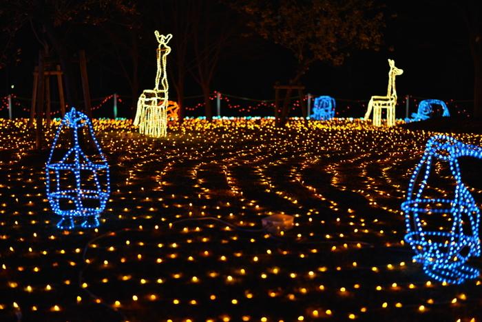 大阪市立長居植物園では、約25万個のLED電球に照らされた壮大なイルミネーションが開催されます。