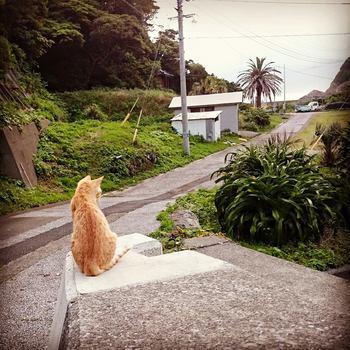 いかがでしたか?九州は大分に属する小さな小さな島、深島。美しい島の豊かな自然と、そこに暮らすおじいやおばあとネコたち。島に流れる、穏やかでやさしい時間をいつまでも大切に遺したいものですね・・・