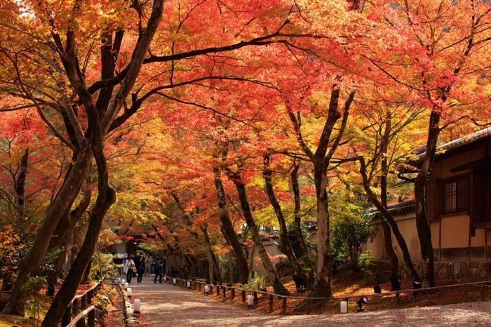 「宝厳院(ほうごんいん)」は、天龍寺の塔頭寺院の一つ。春と秋にだけ特別に一般公開される嵐山の名所です。 宝厳院の見所は、室町期に作庭された「獅子吼の庭(ししくのにわ)」。嵐山の自然景観を景観を取り入れた借景回遊式庭園で、獅子の形をした獅子岩と、岩から生えている破岩の松でよく知られています。