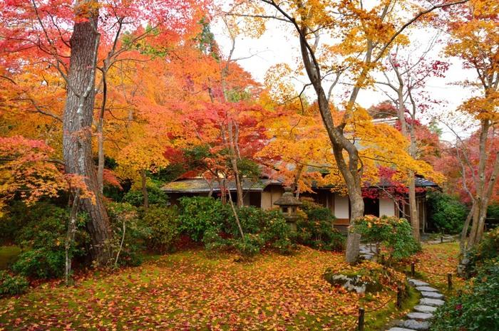 【園内の「滴水庵」(登録有形文化財)。明治時代に建てられたものを、昭和7年にこの地に移築した数寄屋風の茶室。】