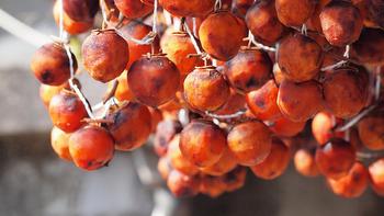 渋柿を食べれるように加工するには干し柿が有名ですね。 皮を剥いて、紐で吊るして作ります。