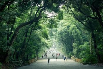 こちらはパワースポットとして有名な明治神宮。都会とは思えない壮大な森から木々の癒しを全身に感じられる人気のスポットです。