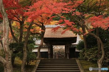 """境内にも、美しい紅葉スポットがたくさんあります。仏殿の左側にある居士林では、茅葺の門を背景に色づく、もみじのトンネルが楽しめます。また方丈裏庭園では、水面に映る紅葉との共演が◎縁側に座って、ゆったりと""""わびさび""""の世界を堪能することができます。"""