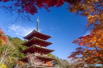 鎌倉を代表する寺院の一つ、長谷寺。紅葉の時期には絶対に訪れたいスポットです。一説には奈良時代に建造されたといわれる浄土宗系統の単立寺院で、本尊である巨大な十一面観音像は見る者を圧倒します。最大の見どころは、ライトアップされた紅葉。闇夜に浮かぶ姿は、何とも幻想的です。