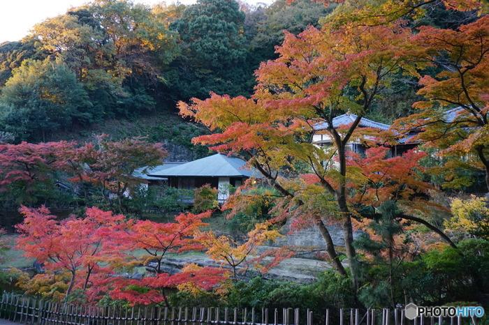 秋もやっぱり魅力的。鎌倉で楽しむ【紅葉スポット5選】