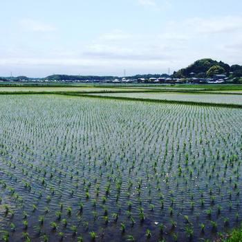 酒造りにとって何より大切なことは、微生物に良い働きをしてもらう事だそう。それには「エサ」と「場」が重要な鍵になります。 寺田本家では、「エサ」であるお米を近くの農家と手を組み「無農薬米」に、水も地下水を使用し「生きたお米と生きたお水」にこだわります。