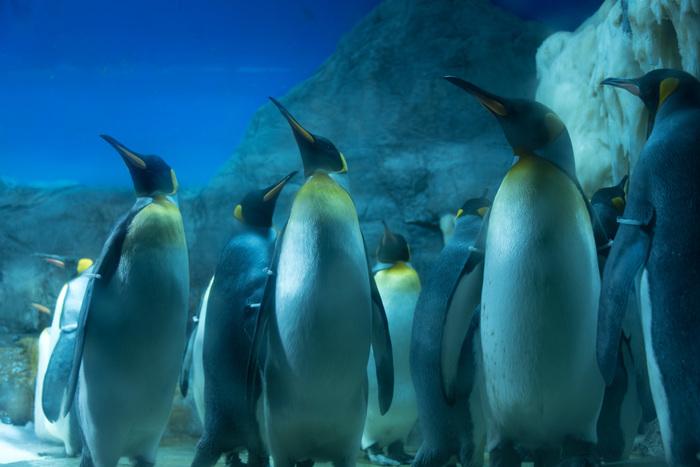 氷点を下回る極寒の世界を再現したペンギンゾーンはまるで南極大陸の縮図です。ペンギンがよちよちと歩く様子や、海の中に飛び込んでゆく様子は、大人から子供まで楽しむことができます。