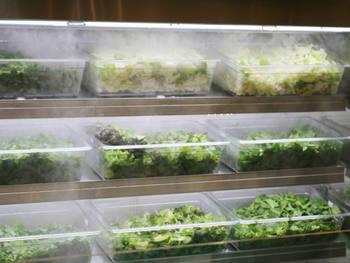 鮮度管理の難しい食材もしっかりと温度管理されてディスプレイ。見るからにみずみずしいお野菜に食欲がわいてきます。
