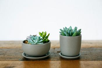 小さなサイズなら観葉植物を飾ってもいいですよね。中でもぷっくり可愛い多肉植物はおススメ♪癒し効果だけでなく、空気清浄効果や加湿効果・消臭効果まであると言われているので、心身ともに元気をもらえるかも。