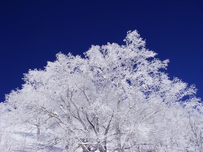 雪や氷、流氷、樹氷など、自然がもたらす芸術は、自分の目で直に見るとさらにその美しさが伝わります。夏の観光シーズンも良いですが、冬も北海道を旅してみませんか?北海道の中でも特に素敵な場所をご紹介します。