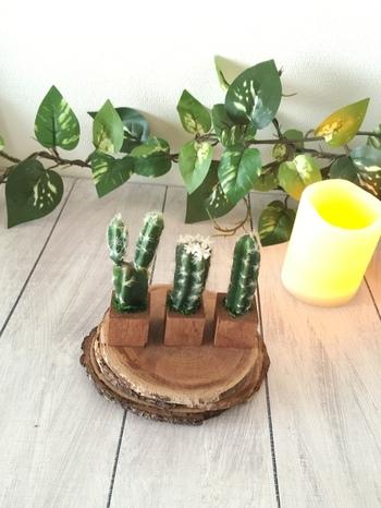 こちらはとてもリアルな造花のサボテン。植物を育てるのが苦手な方でも、並べて飾るだけでお部屋のアクセントになりますね。車に飾っても可愛いかも!