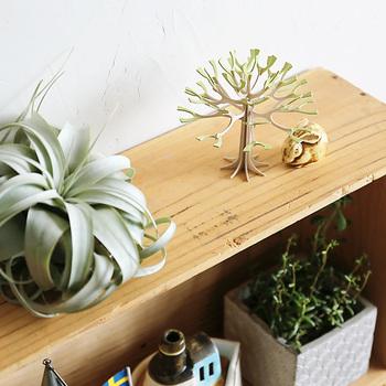 新緑のグリーンの季節。お家の植物たちともよく合います。